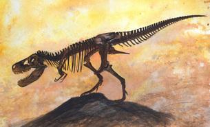 Tyrannosaurus rex dinosaur skeleton.のイラスト素材 [FYI02693659]