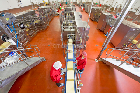 High angle view of workers with digital tablet checking large blocks of cheese at production line inの写真素材 [FYI02693762]