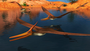 Pteranodon reptiles searching for food in a lake.のイラスト素材 [FYI02693916]