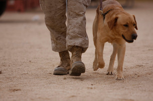 A military working dog and his handler taking a walk.の写真素材 [FYI02694194]