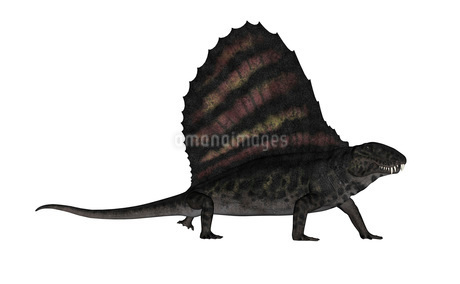Dimetrodon dinosaur - 3D renderのイラスト素材 [FYI02694309]