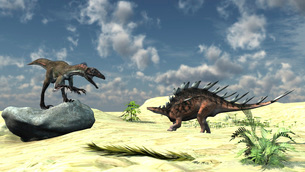 Confrontation between a Utahraptor and a Kentrosaurus.のイラスト素材 [FYI02695026]
