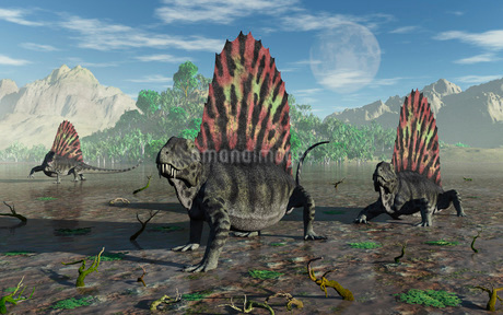 A group of sail-backed Dimetrodons during Earth's Permian period.のイラスト素材 [FYI02695042]