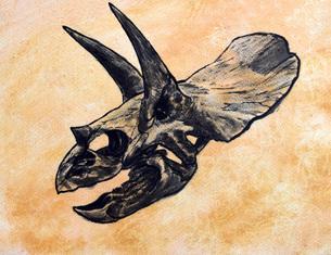 Triceratops dinosaur skull.のイラスト素材 [FYI02695142]