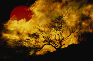 Composite of a lone tree, burning fire, and red Sun.の写真素材 [FYI02695302]
