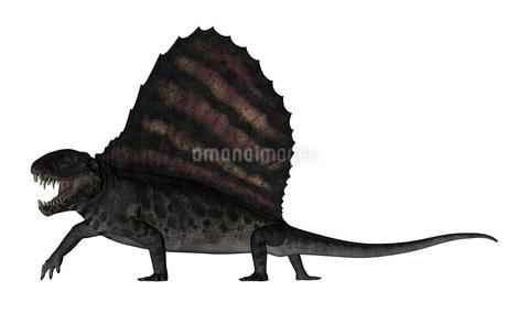Dimetrodon dinosaur - 3D renderのイラスト素材 [FYI02695612]
