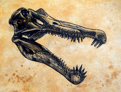Spinosaurus dinosaur skull.のイラスト素材 [FYI02695623]