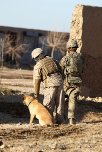 A dog handler takes care of his military working dog.の写真素材 [FYI02695627]
