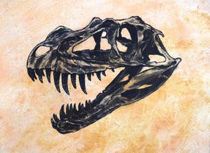 Ceratosaurus dinosaur skull.のイラスト素材 [FYI02695673]