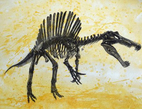 Spinosaurus dinosaur skeleton.のイラスト素材 [FYI02695965]