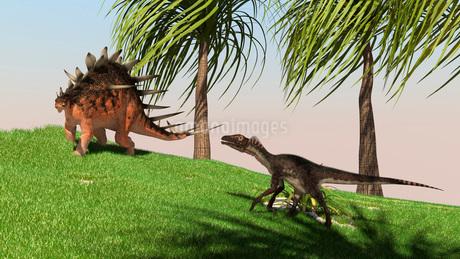 Confrontation between a Kentrosaurus and a Utahraptor.のイラスト素材 [FYI02696266]