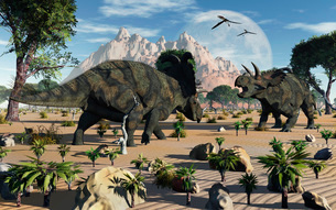 Confrontation between two male Albertaceratops.のイラスト素材 [FYI02696413]