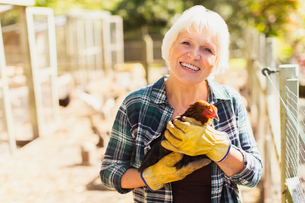 Portrait smiling woman holding chicken near coopsの写真素材 [FYI02697460]