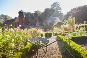 Wheelbarrow in sunny formal gardenの写真素材 [FYI02697602]