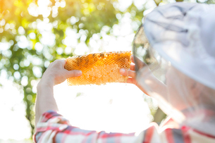 Beekeeper examining honeycombの写真素材 [FYI02697792]