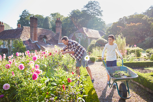 Father and son gardening in sunny flower gardenの写真素材 [FYI02697874]