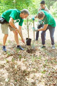 Environmentalist volunteers planting new treeの写真素材 [FYI02698463]