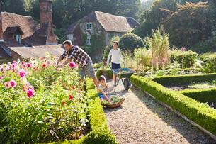 Family gardening in sunny flower gardenの写真素材 [FYI02698603]