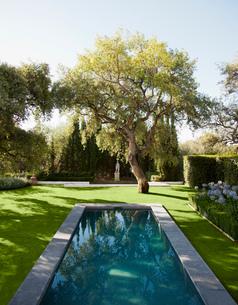 Lap pool in tranquil gardenの写真素材 [FYI02698695]