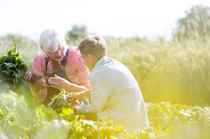 Grandmother and grandson harvesting vegetables in sunny gardenの写真素材 [FYI02698959]