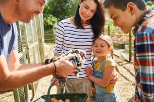 Family harvesting fresh eggs from chickenの写真素材 [FYI02699177]