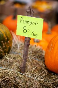Sweden, Oland, Allvaret, Close-up of pumpkin price tagの写真素材 [FYI02699750]