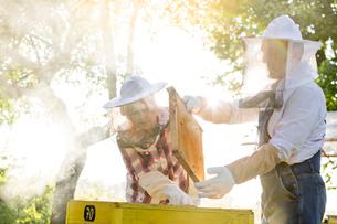 Beekeepers in protective clothing examining beehiveの写真素材 [FYI02700126]