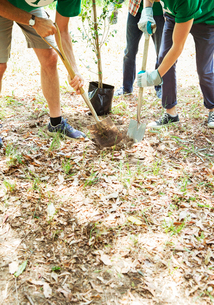Environmentalist volunteers planting new treeの写真素材 [FYI02700366]