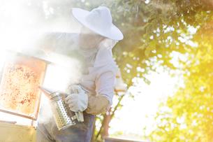Beekeeper using smoker to calm beesの写真素材 [FYI02700422]