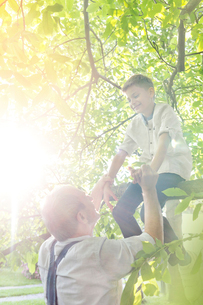 Grandfather helping grandson off sunny tree branchの写真素材 [FYI02701085]