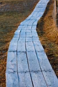 Sweden, Skane, Havang, Wooden boardwalkの写真素材 [FYI02701263]