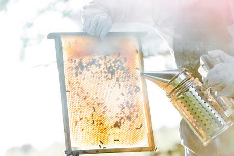Beekeeper using smoker to calm bees on honeycombの写真素材 [FYI02701563]