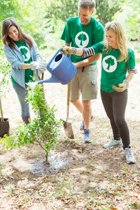 Environmentalist volunteers watering newly planted treeの写真素材 [FYI02701576]