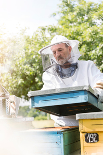 Beekeeper in protective clothing carrying removing beehive lidの写真素材 [FYI02702384]