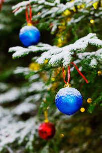 Finland, Heinola, Christmas tree outdoorsの写真素材 [FYI02702646]