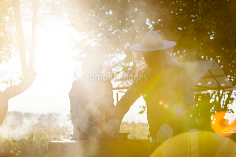 Beekeepers in protective suits examining sunny hivesの写真素材 [FYI02702701]