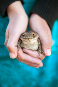 Sweden, Smaland, Hasselo, Woman holding frog in handsの写真素材 [FYI02703589]