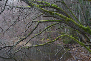 Sweden, Sodermanland, Bornsjon, Bare trees along river in forestの写真素材 [FYI02703599]