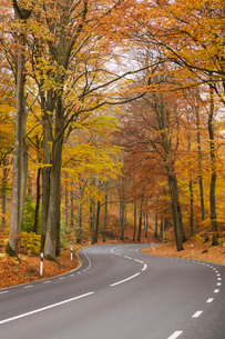 Sweden, Skane, Soderasens National Park, Rostanga, Road in forestの写真素材 [FYI02703887]