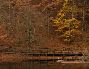 Sweden, Skane, Soderasens National Park, Pedestrian walkway by pond in forestの写真素材 [FYI02703920]