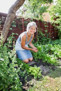 Sweden, Skane, Hoganas, Portrait of mature woman gardeningの写真素材 [FYI02704140]