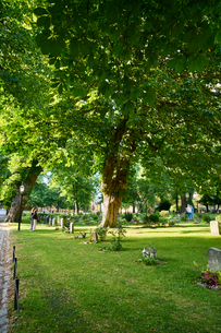 Sweden, Sodermanland, Stockholm, Green grass and trees in cemeteryの写真素材 [FYI02704150]