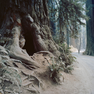 USA, California, Man walking through Jedediah Smith Redwood State Parkの写真素材 [FYI02704153]