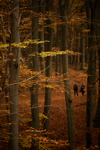 Sweden, Skane, Soderasens National Park, Forest in autumnの写真素材 [FYI02704200]