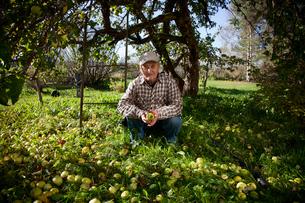 Finland, Forssa, Senior man picking applesの写真素材 [FYI02704209]