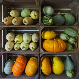 Sweden, Skane, Vanga, Pumpkins in wooden boxesの写真素材 [FYI02704320]