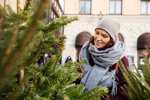 Sweden, Stockholm, Gamla Stan, Woman choosing christmas treeの写真素材 [FYI02704469]