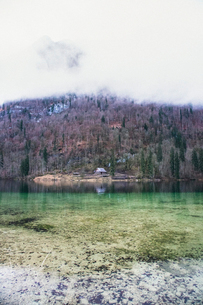 Germany, Bavaria, Schonau am Konigsee, Berchtesgarden, Lake in forestの写真素材 [FYI02704527]
