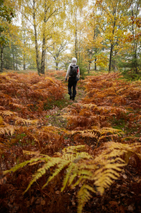 Sweden, Skane, Soderasens National Park, Klova Hallar, Mid adult woman hiking in forestの写真素材 [FYI02704551]