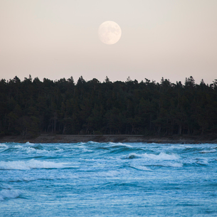 Sweden, Gotland, Moon over forestの写真素材 [FYI02704654]